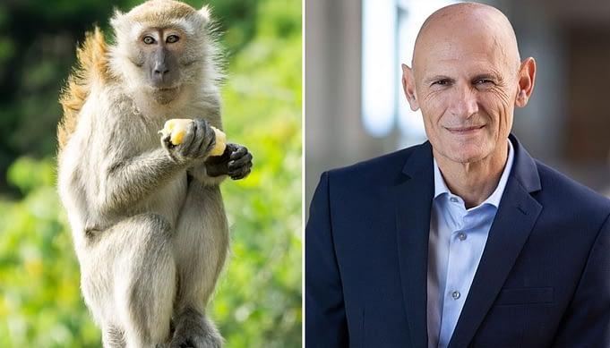 getty monkey macaque Juan Carlos Izpisua Belmonte 1120