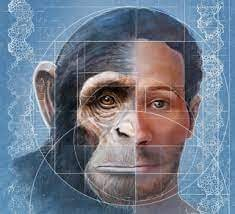shape of human-monkey